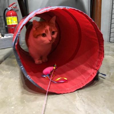 고양이장난감