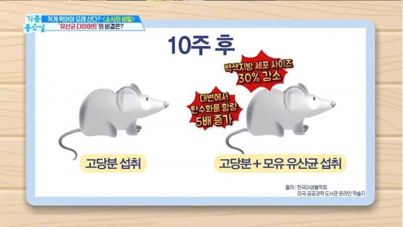모유 유산균 bnr17 쥐 시험 사진