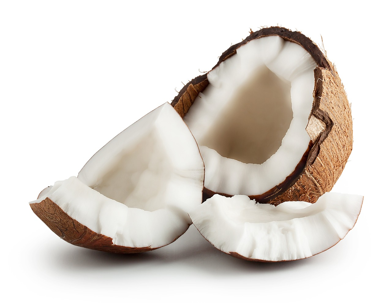 코코넛 사진