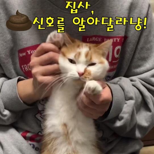 고양이건강