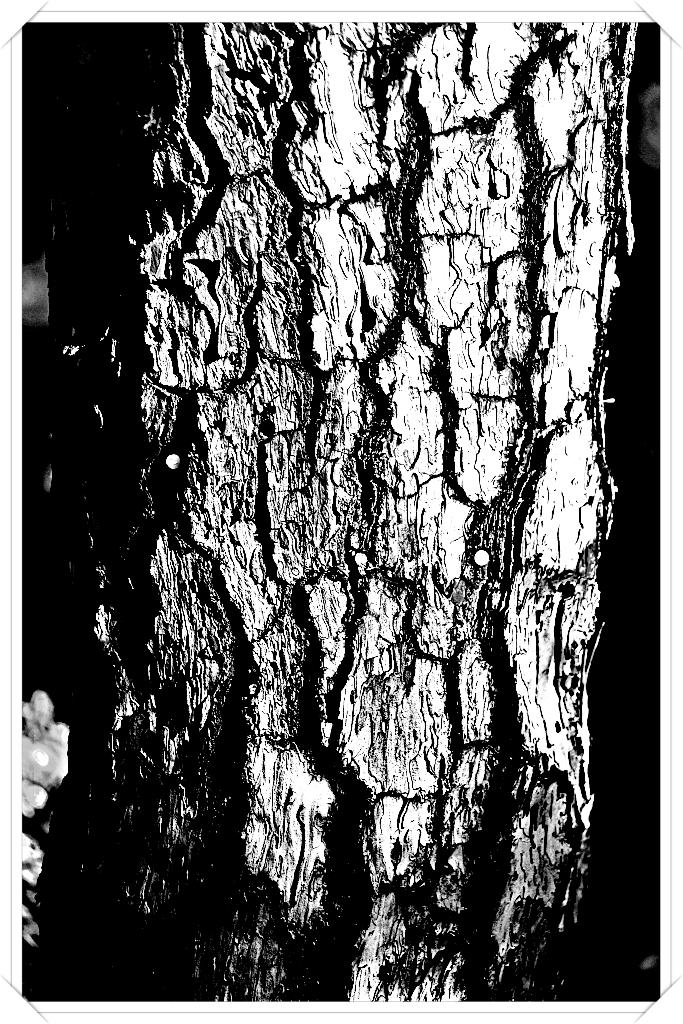 [感] 나무처럼 살아간다는 것