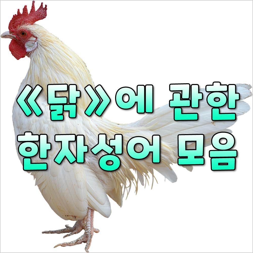 닭한자성어