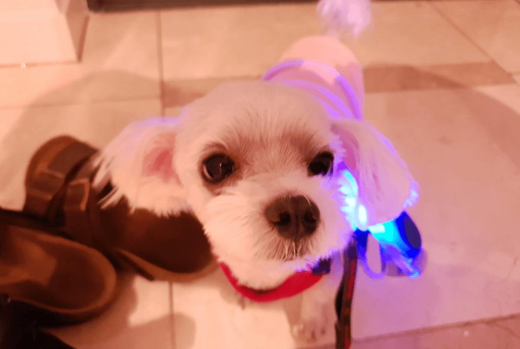 강아지-모습