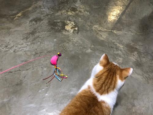 고양이쥐인형