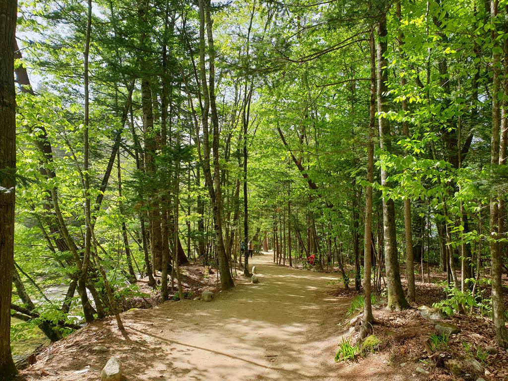 오대산 월정사 전나무숲길과 오대천