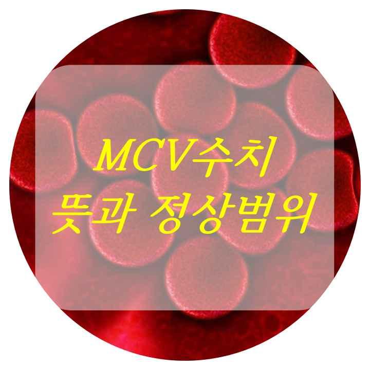 적혈구 사진