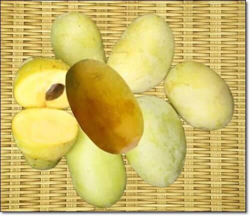 포포나무열매