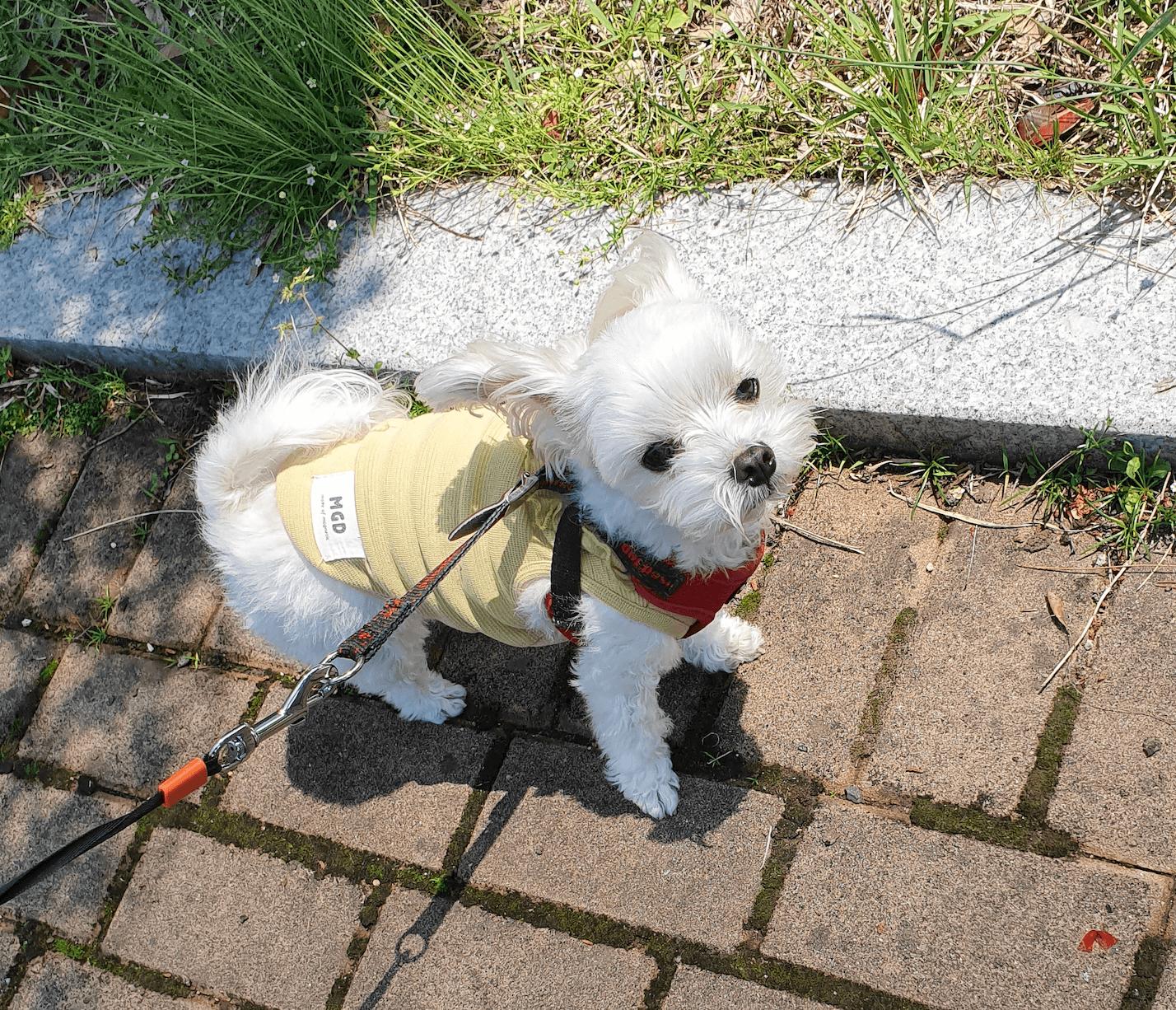강아지-산책-모습