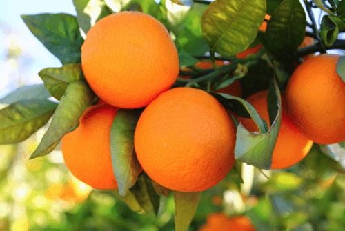 오렌지02a