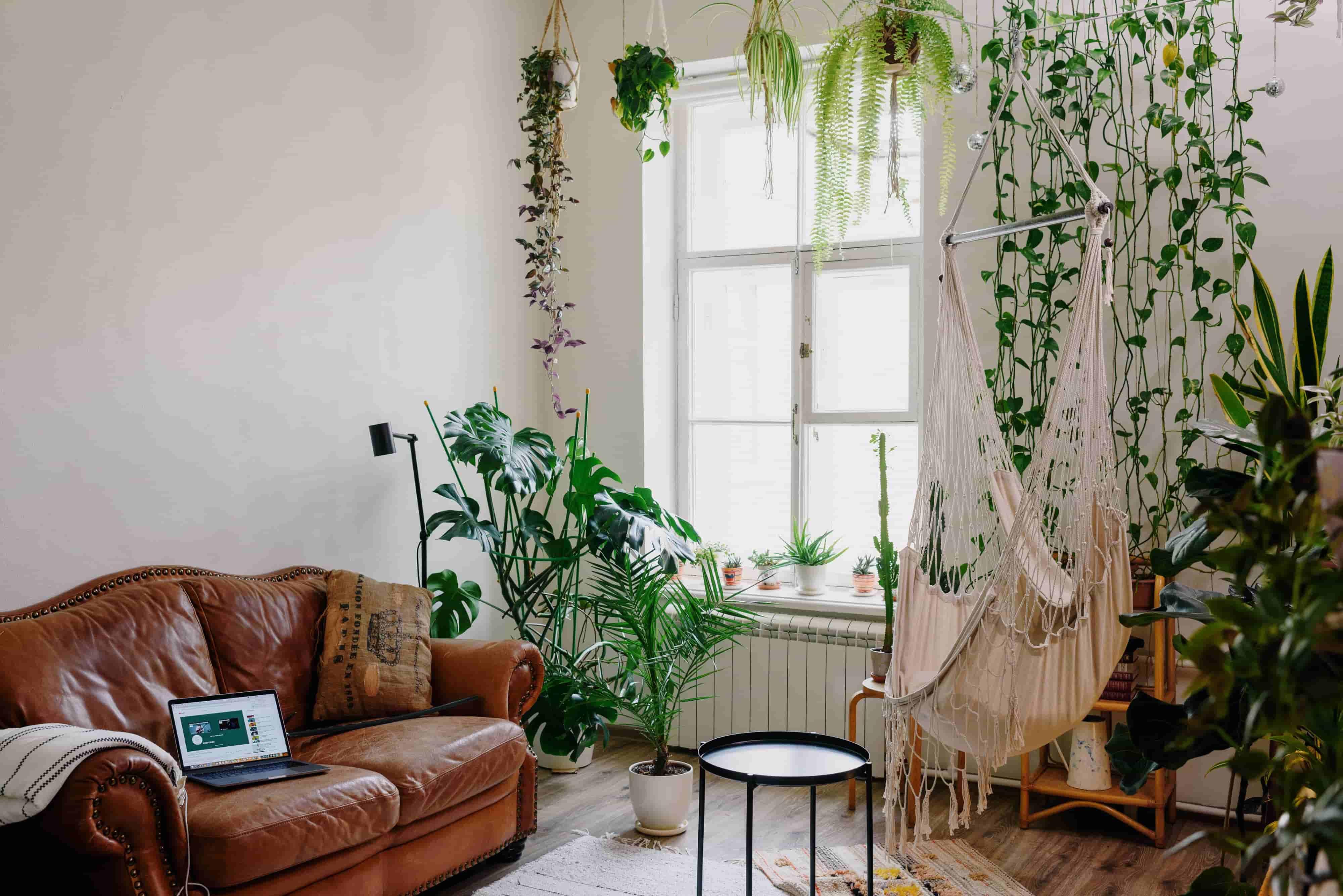 식물이 가득한 거실