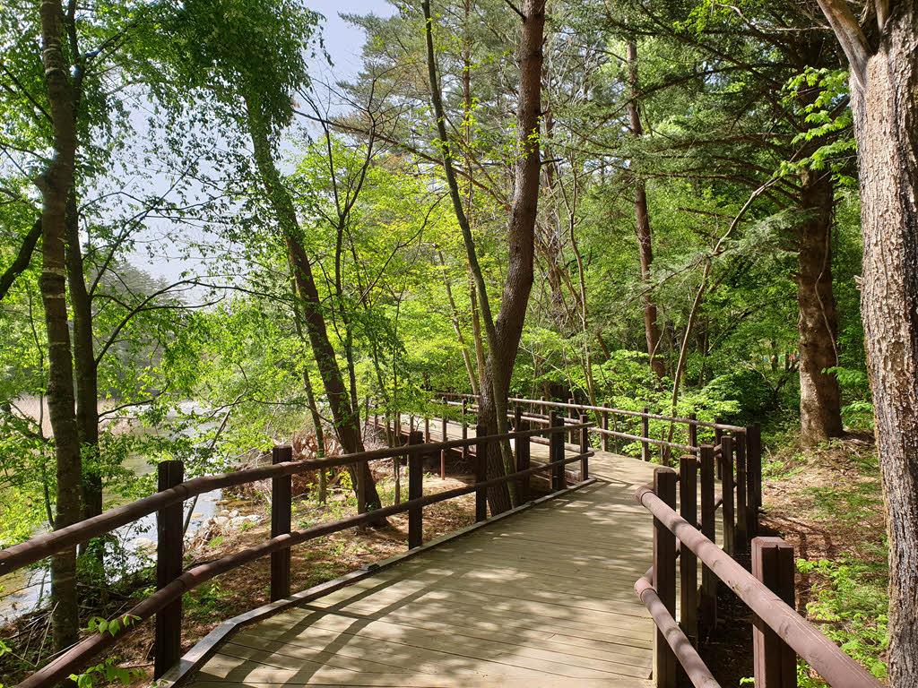 오대산 월정사 전나무숲길 데크길 구간