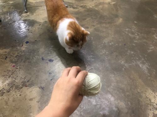 고양이끈위험성