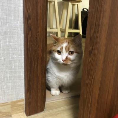 고양이고구마