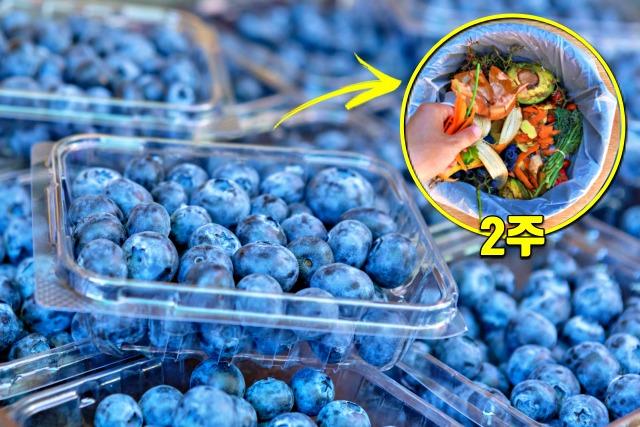 블루베리, 유통기한 지나면, 먹으면 안되는 음식, 건강, 팁줌마 매일꿀정보