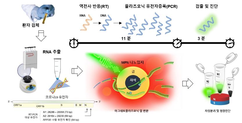 코로나 양성 판정-pcr 진단키트원리