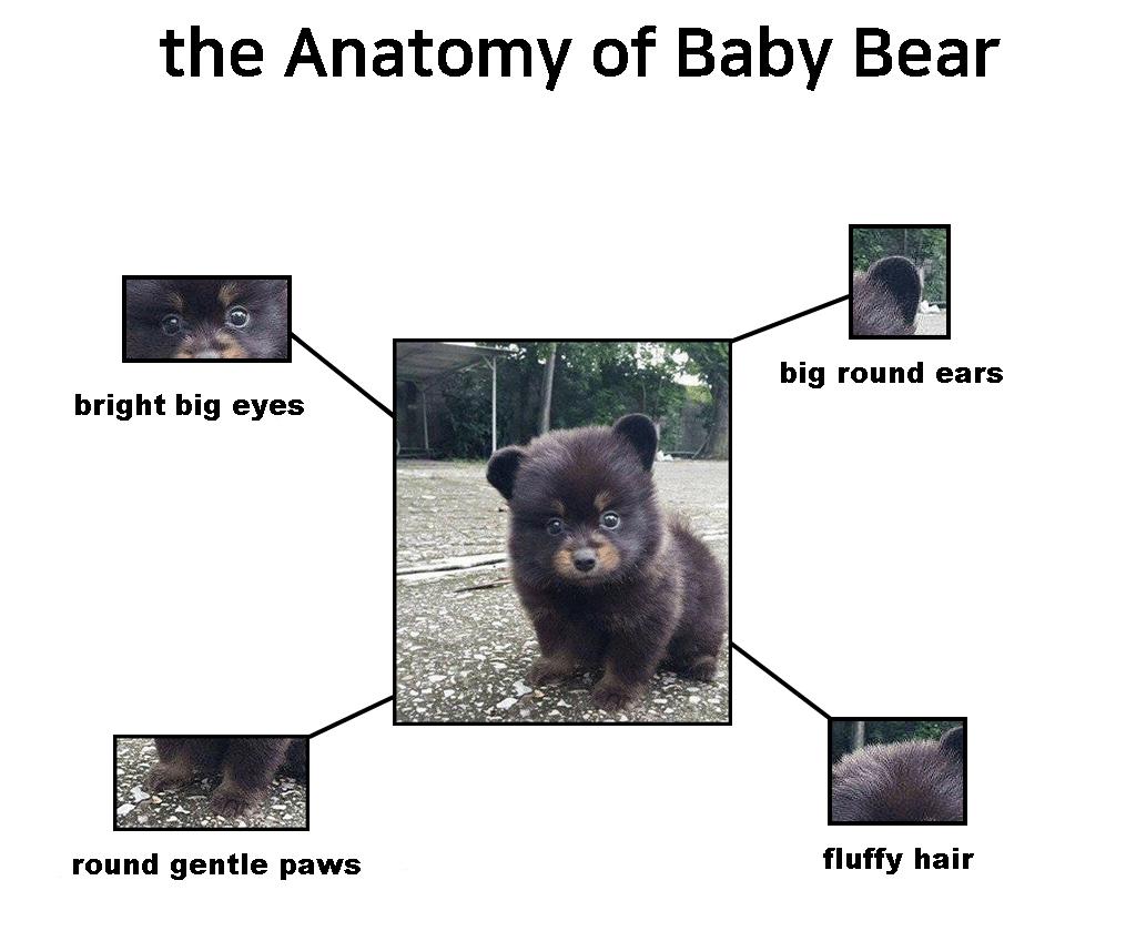 곰돌이를 분석해 보았다