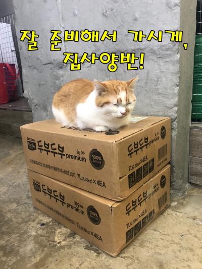식빵굽는고양이