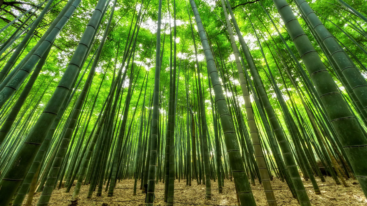 십장생대나무