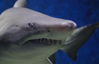 상어연골추출물효능