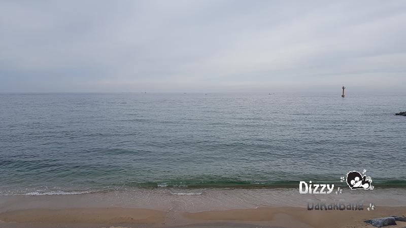 강릉 맛집 주문진 도깨비 촬영지 현자네 해물촌