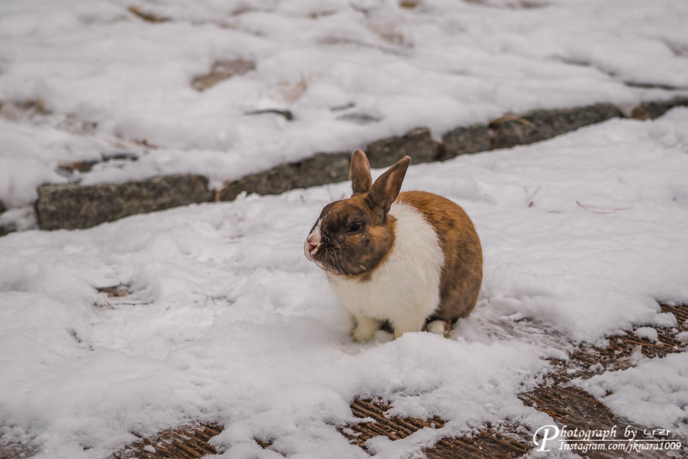올림픽공원 토끼