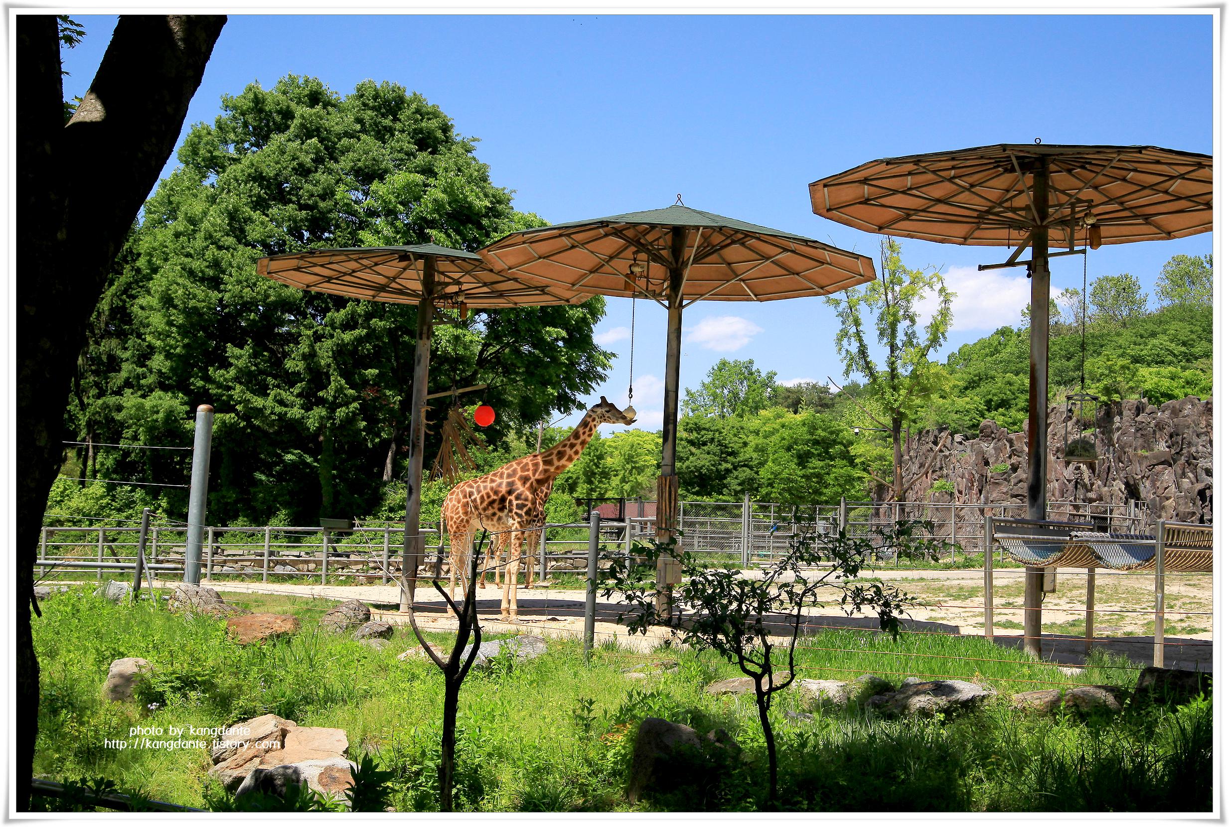 서울대공원 동물원의 다양한 동물들