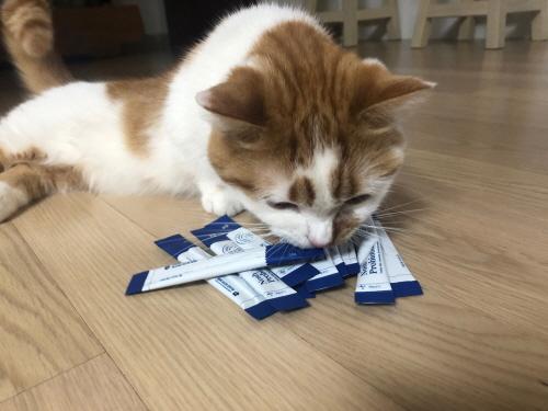 고양이노쉬프로바이오틱스