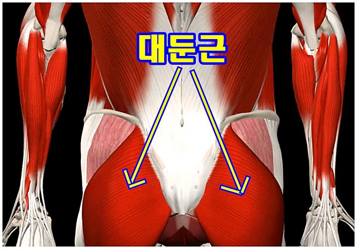 엉덩이-대둔근