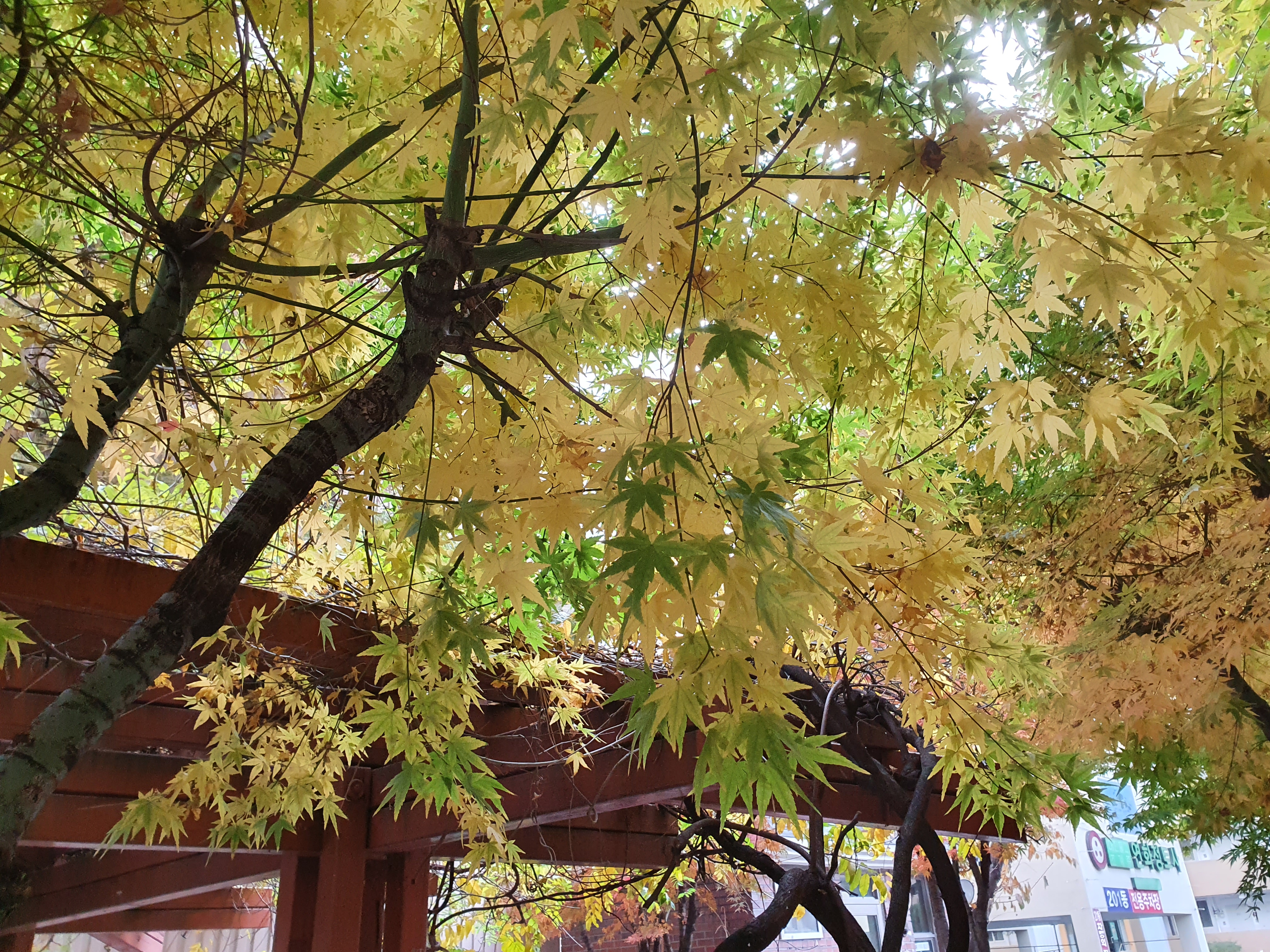 예쁜 가을이 간다