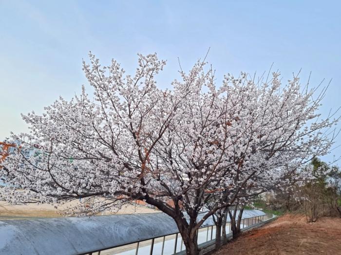 봄이 성큼오네요