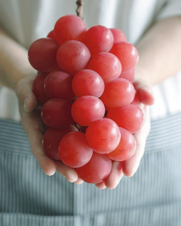 비싼 과일, 루비로만 포도, 매일꿀정보