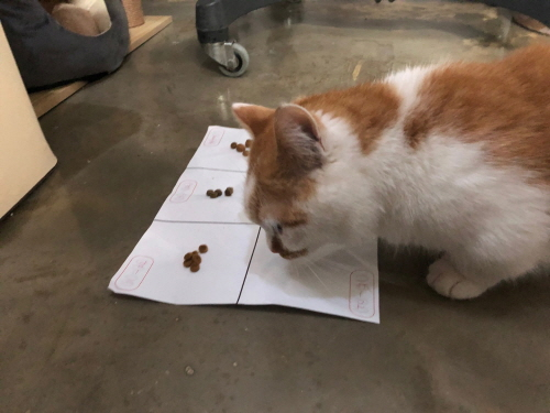 고양이사료선택