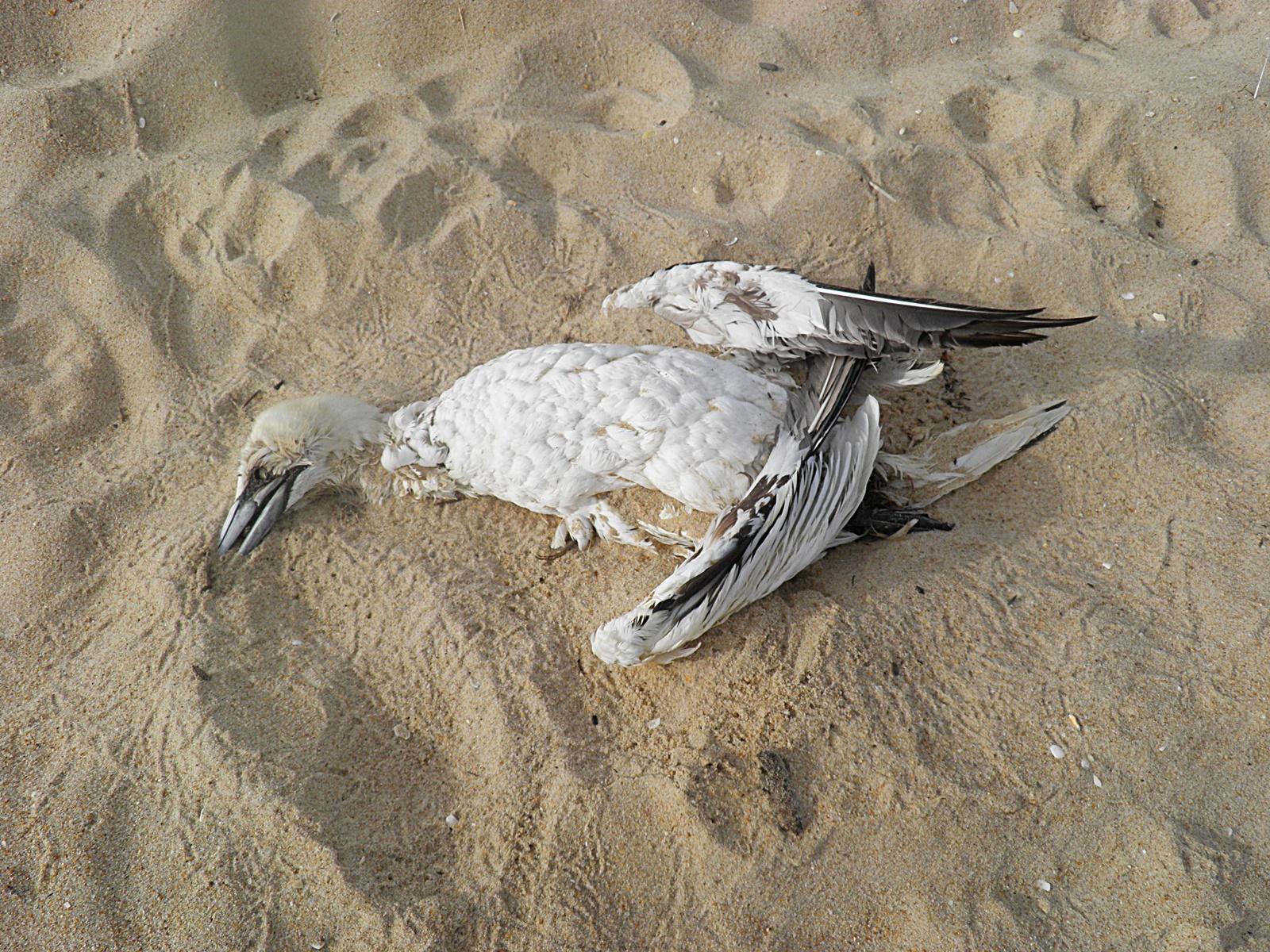 해변의 죽은 새