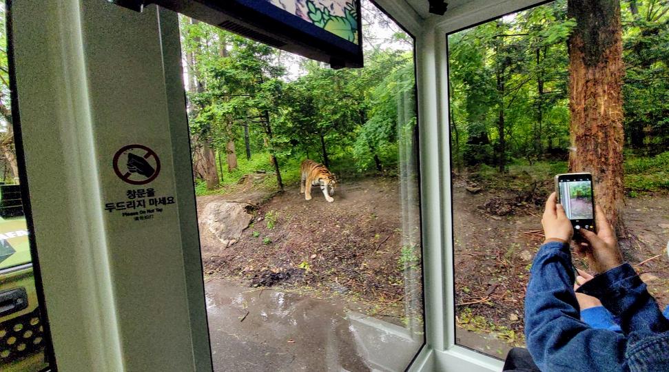 에버랜드 사파리 트램 체험 후기 사진 7