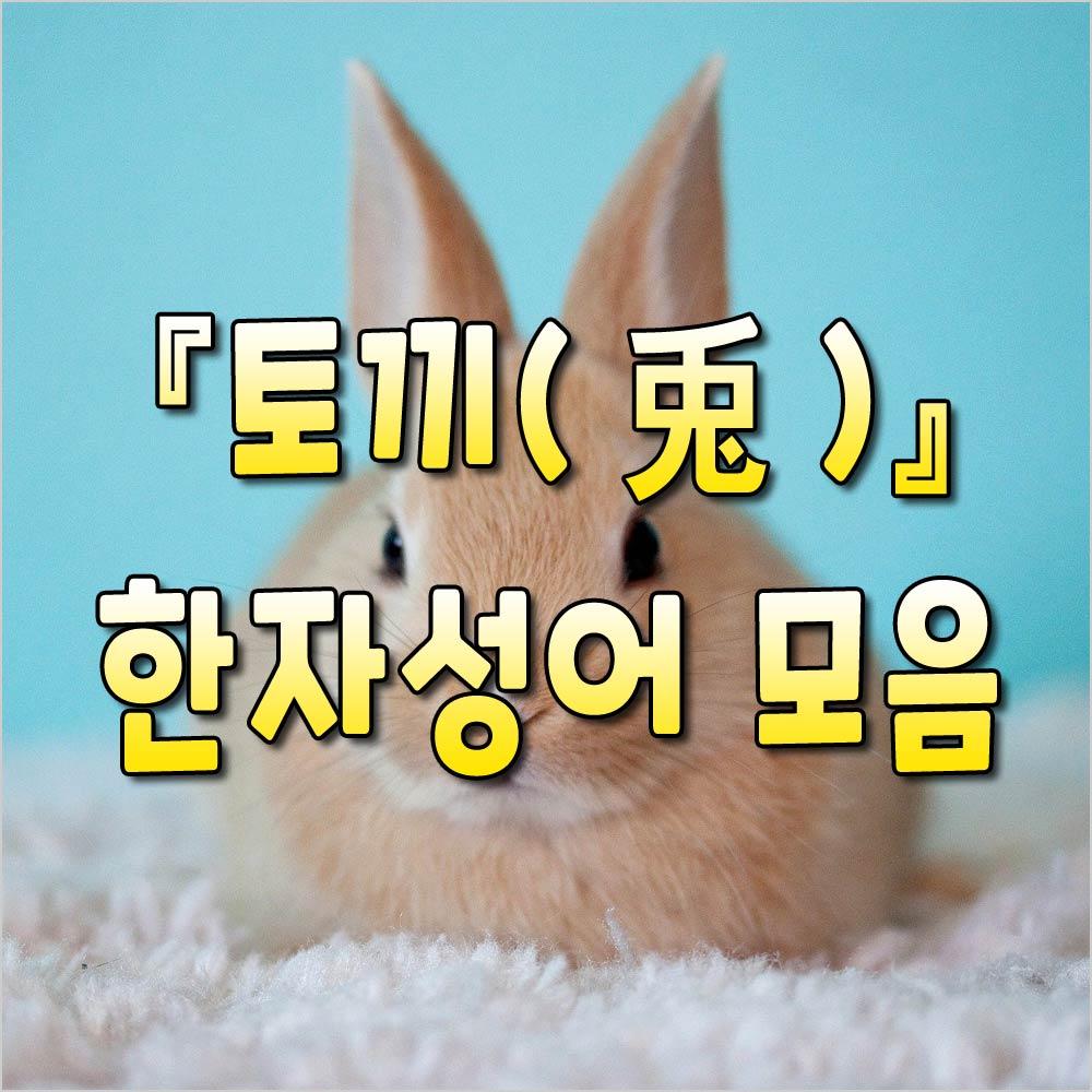 토끼사자성어