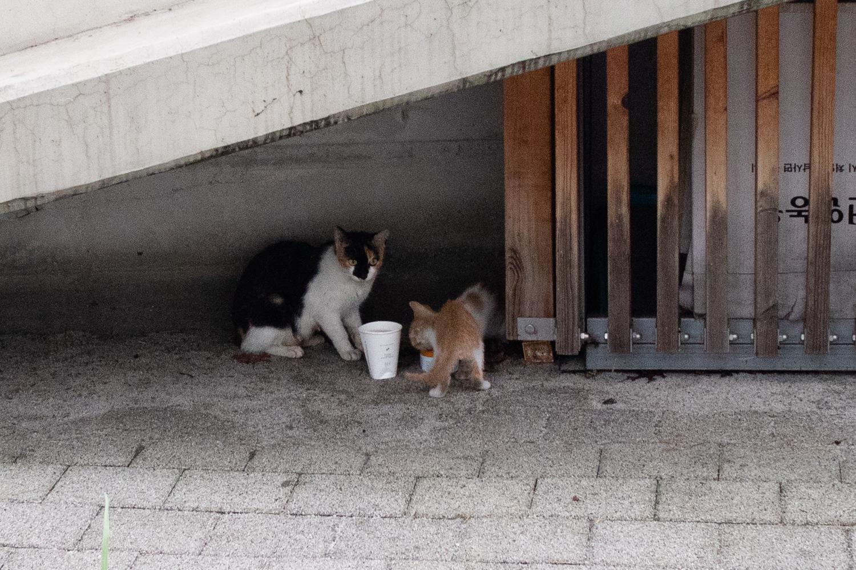 장마비를 피하는 길냥이 가족에게 고양이 캔 납품