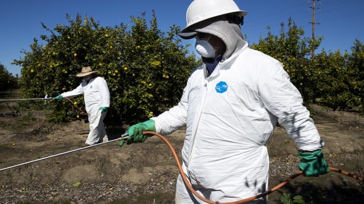 코로나바이러스가 농장을 유휴 상태로 만들고 각국이 물자를 비축함에 따라 식량위기가 도래하고 있다.
