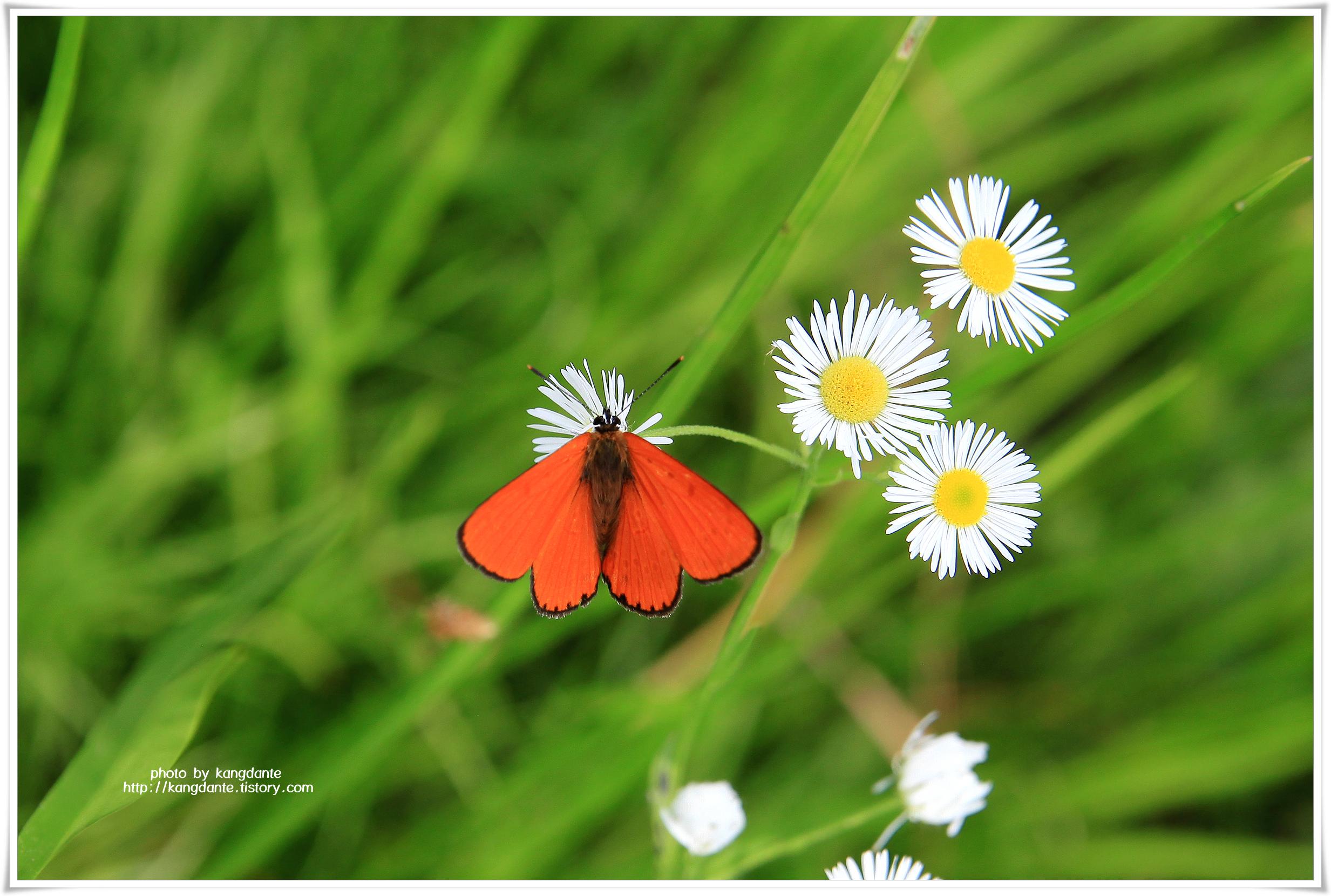 세미원의 나비와 잠자리
