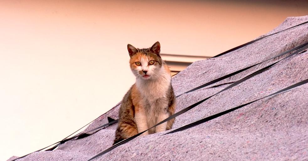 길냥이들을 지키는 동네히어로를 담은 다큐 고양이집사