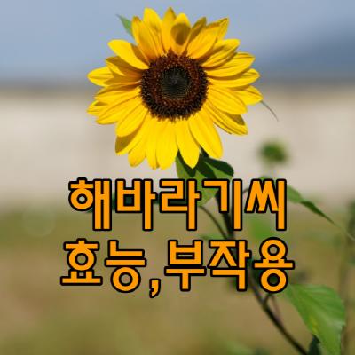 해바라기씨효능