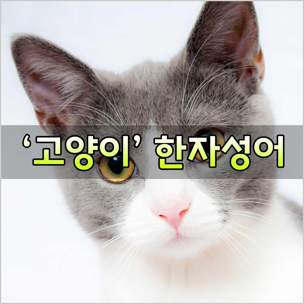 고양이사자성어