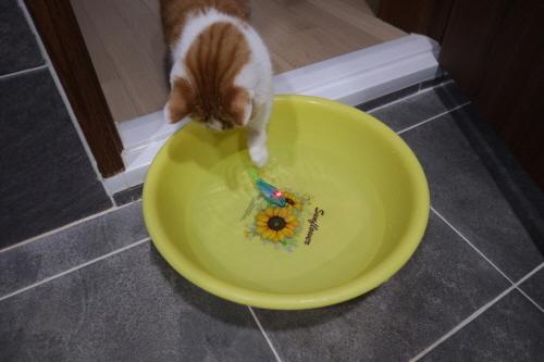 고양이움직이는장난감