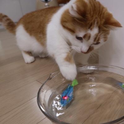 고양이물고기