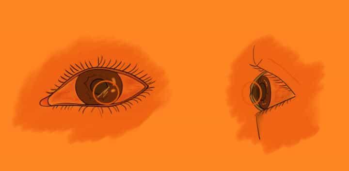 각막, 안구, 현미경, 눈