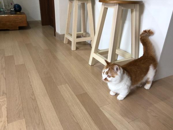 고양이멸치