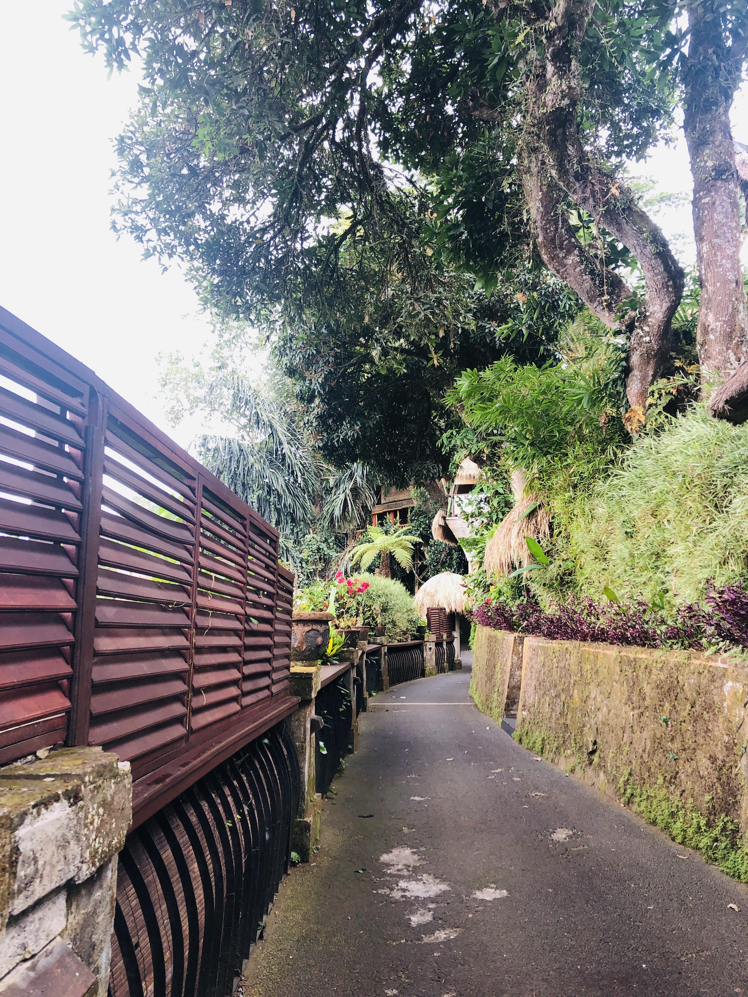[발리] 우붓 도착! 숙소와 택시이야기 쿠푸쿠푸 바롱 빌라 앤 트리 스파 KUPU KUPU BARONG VILLAS AND TREE SPA