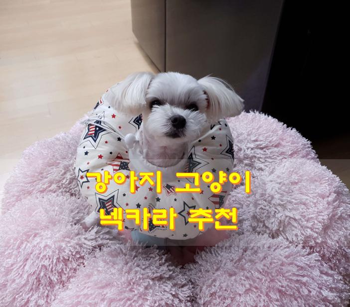 강아지-넥카라-모습