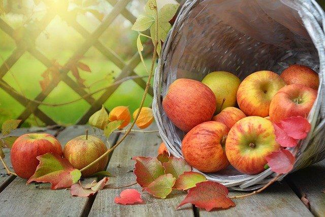 바구니에 담긴 사과
