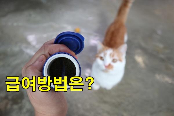 고양이이빨관리