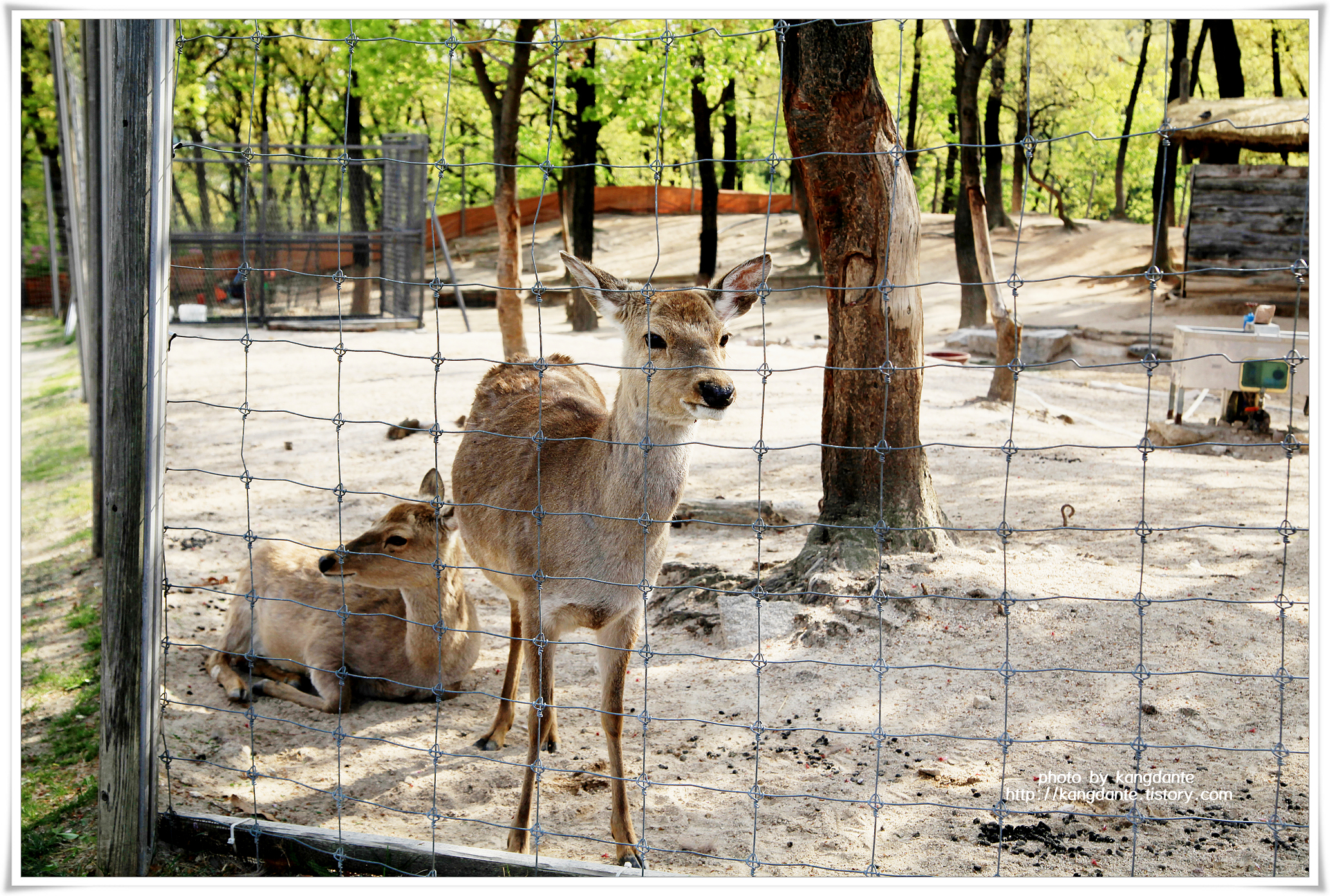 북서울꿈의숲 사슴방사장